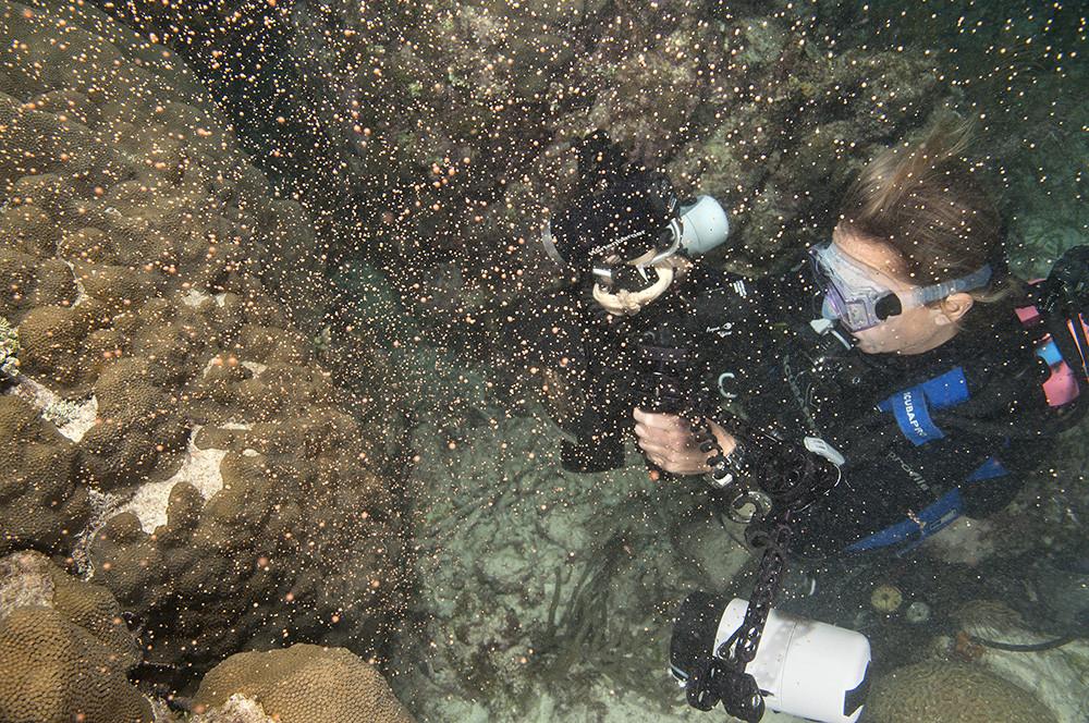 keys coral spawn