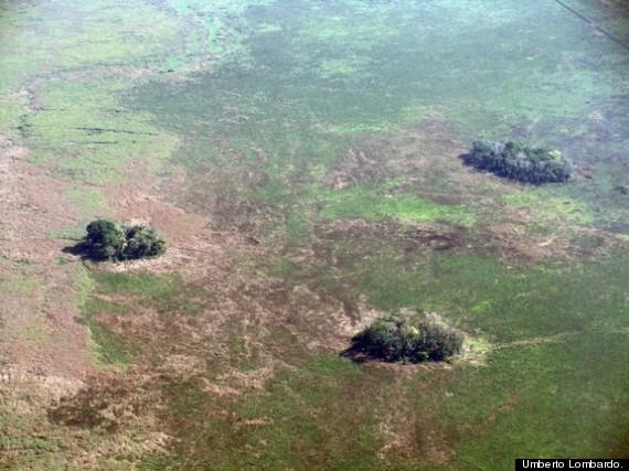 forest islands bolivia