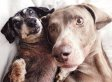 'Harlow And Sage' Instagram Account Is All Sorts Of Perfect (PHOTOS)