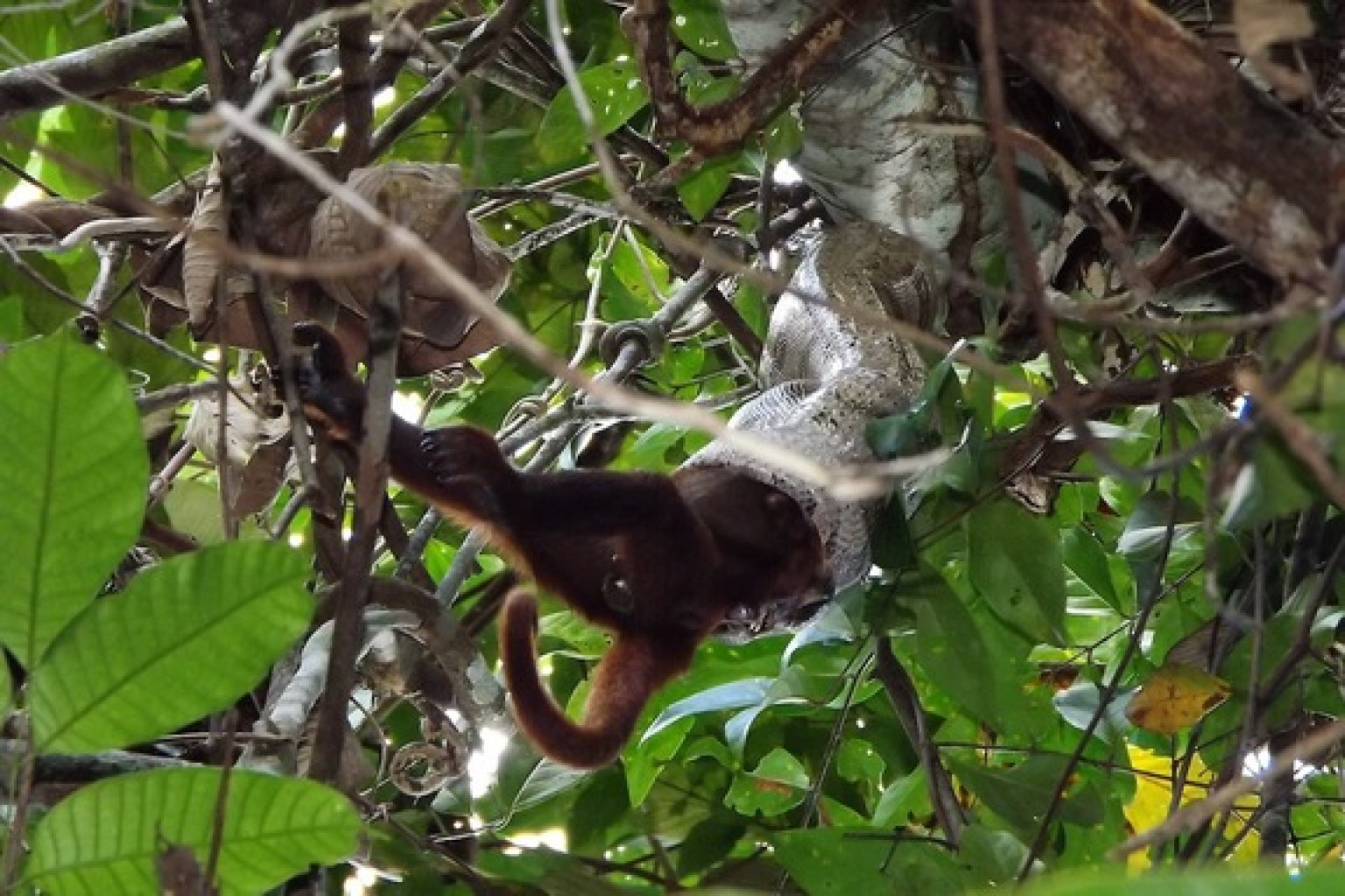 predator prey relationship apes and monkeys