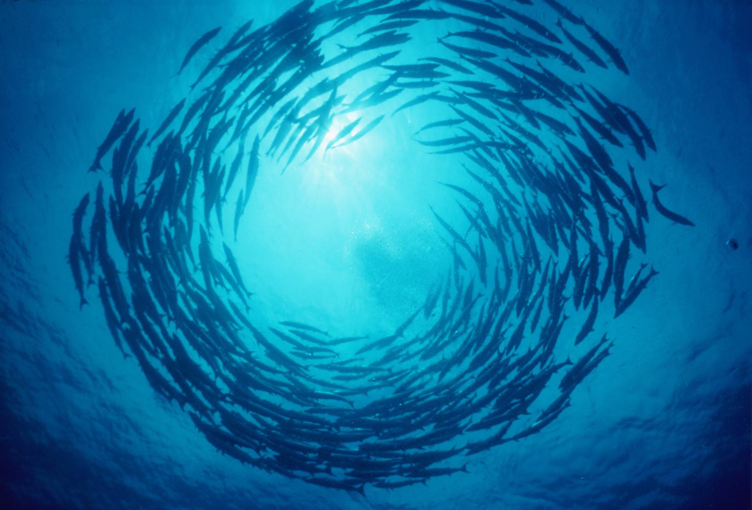 39 fish storms 39 nourish marine life as tarpon transmit for School of fish