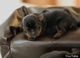 Tiny Puppies On Tiny Couches, 'Nuff Said