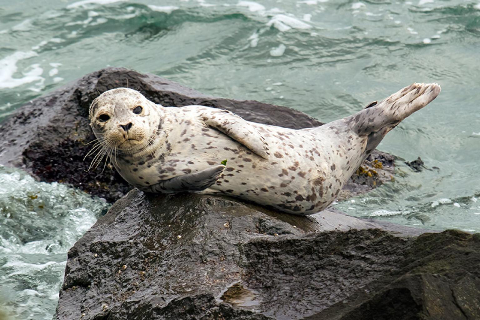 Seal Hunt Essays