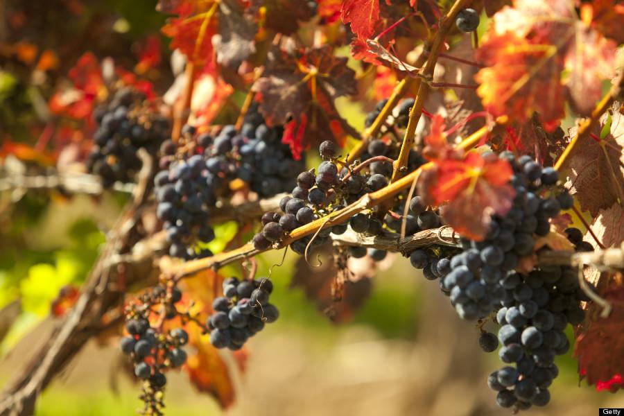 napa valley autumn