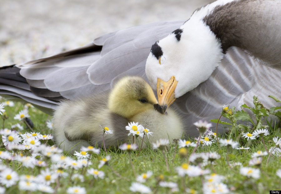 tenderness animal animals incredible kingdom exist these baby affection mother different species 02varvara animales prove true does wisdom lovers amor