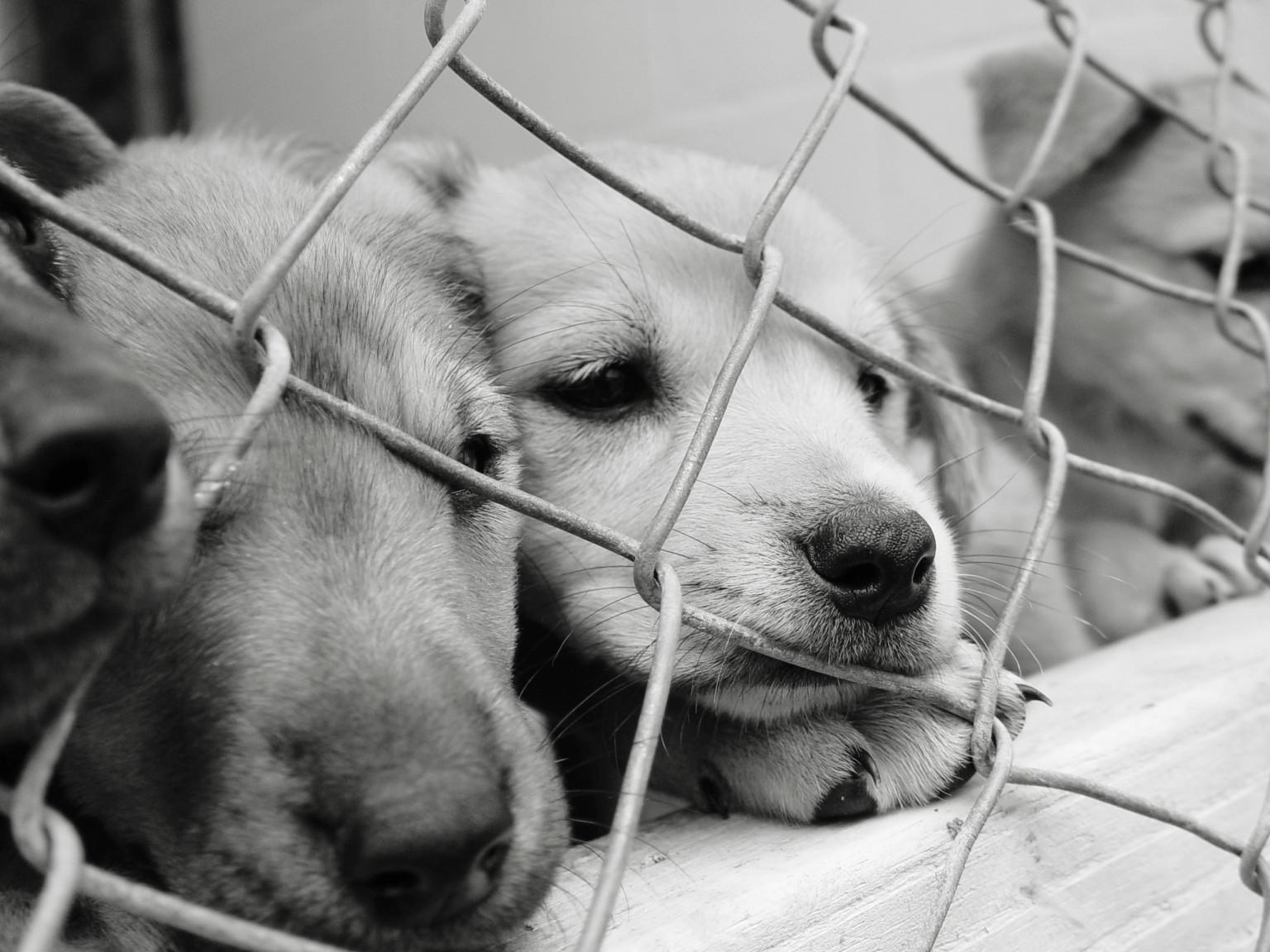 Dog Rescue South Africa Facebook