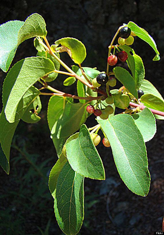 best berries for health