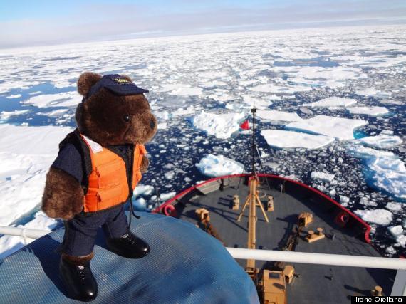 arctic teddy bear