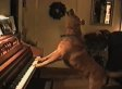 These Animals Playing Instruments Are Pretty Impressive (VIDEO)