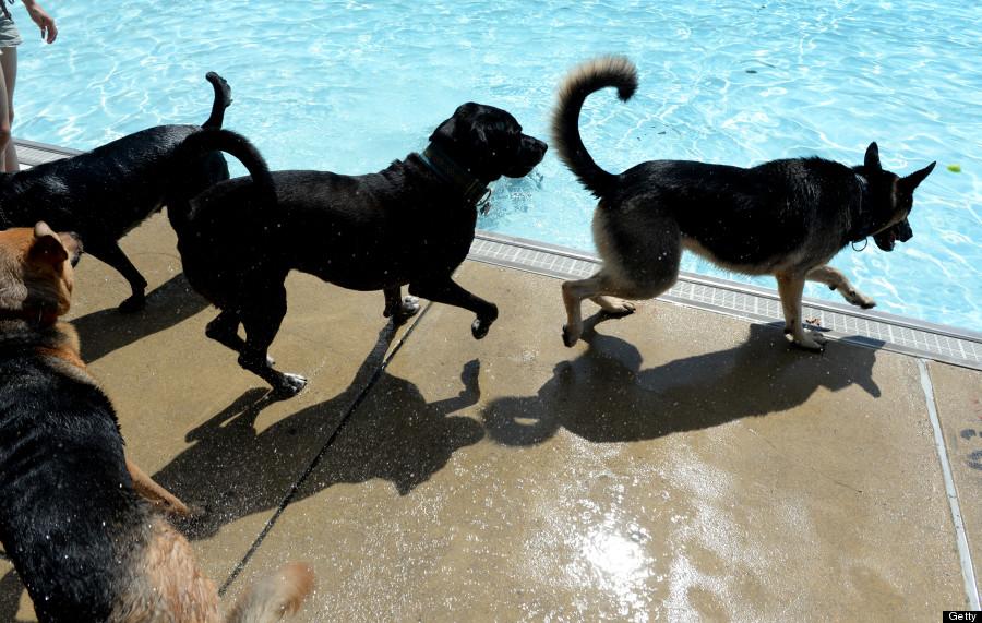 doggie day swim