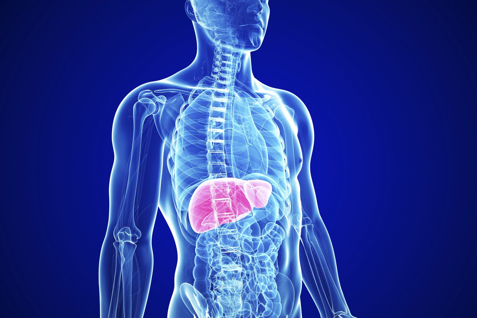 Scientists have identified genes that direct stem cells to form liver cells.