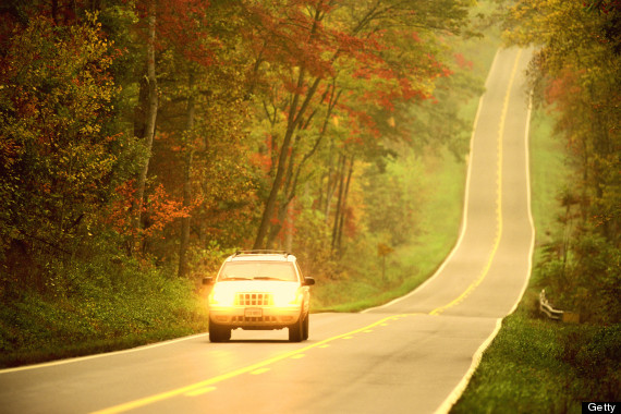 fall driving leaves