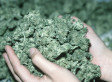Colorado First State In U.S. To Adopt Rules For Legal, Recreational Marijuana