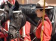 RCMP's Musical Ride In High River Gives Unexpected Salute To Crowd