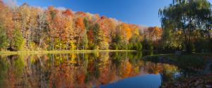 Fall Leaves Canada