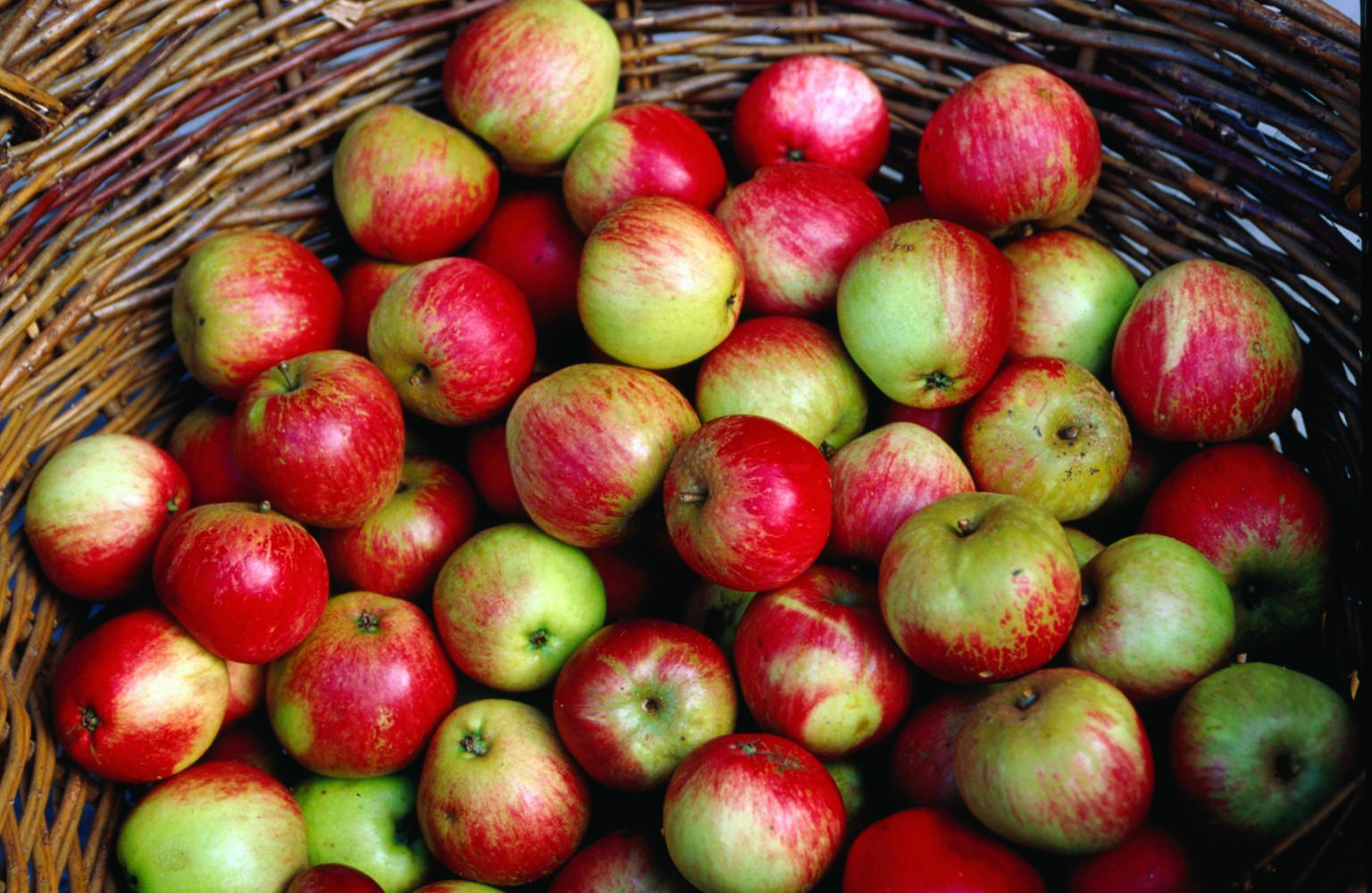 8 bonnes raisons de manger des pommes. Black Bedroom Furniture Sets. Home Design Ideas