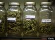 The Denial of Organ Transplants to Medical Marijuana Patients
