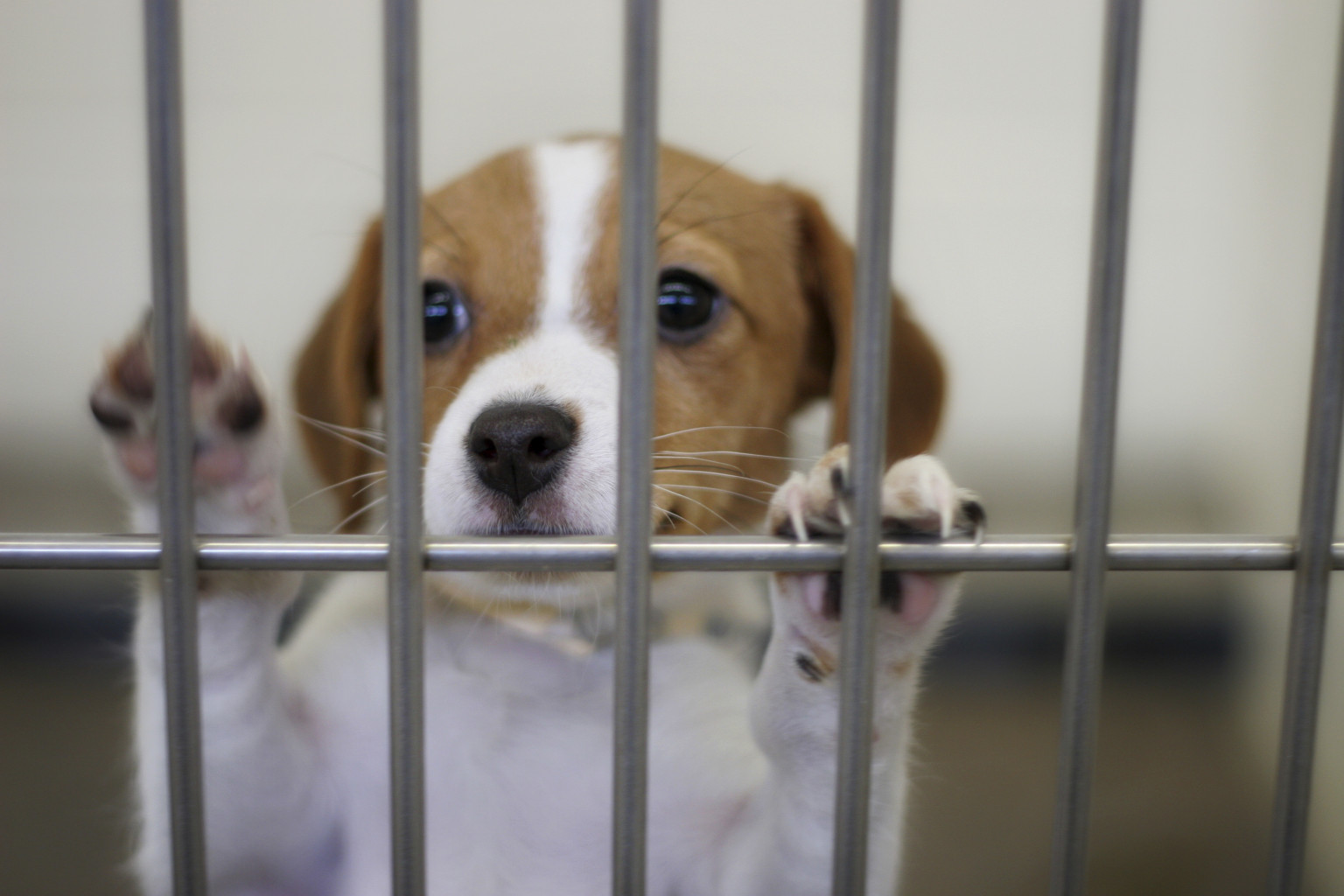 Mobile Dog Pound : Michigan animal shelter gas chamber ban bill passes state