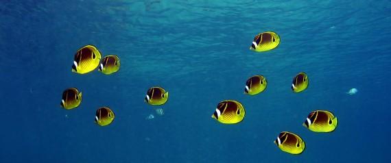 HONOLULU REEF FISH