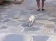 This Golden Retriever Puppy Is SO Excited To See Adorable Baby (VIDEO) (UPDATE)
