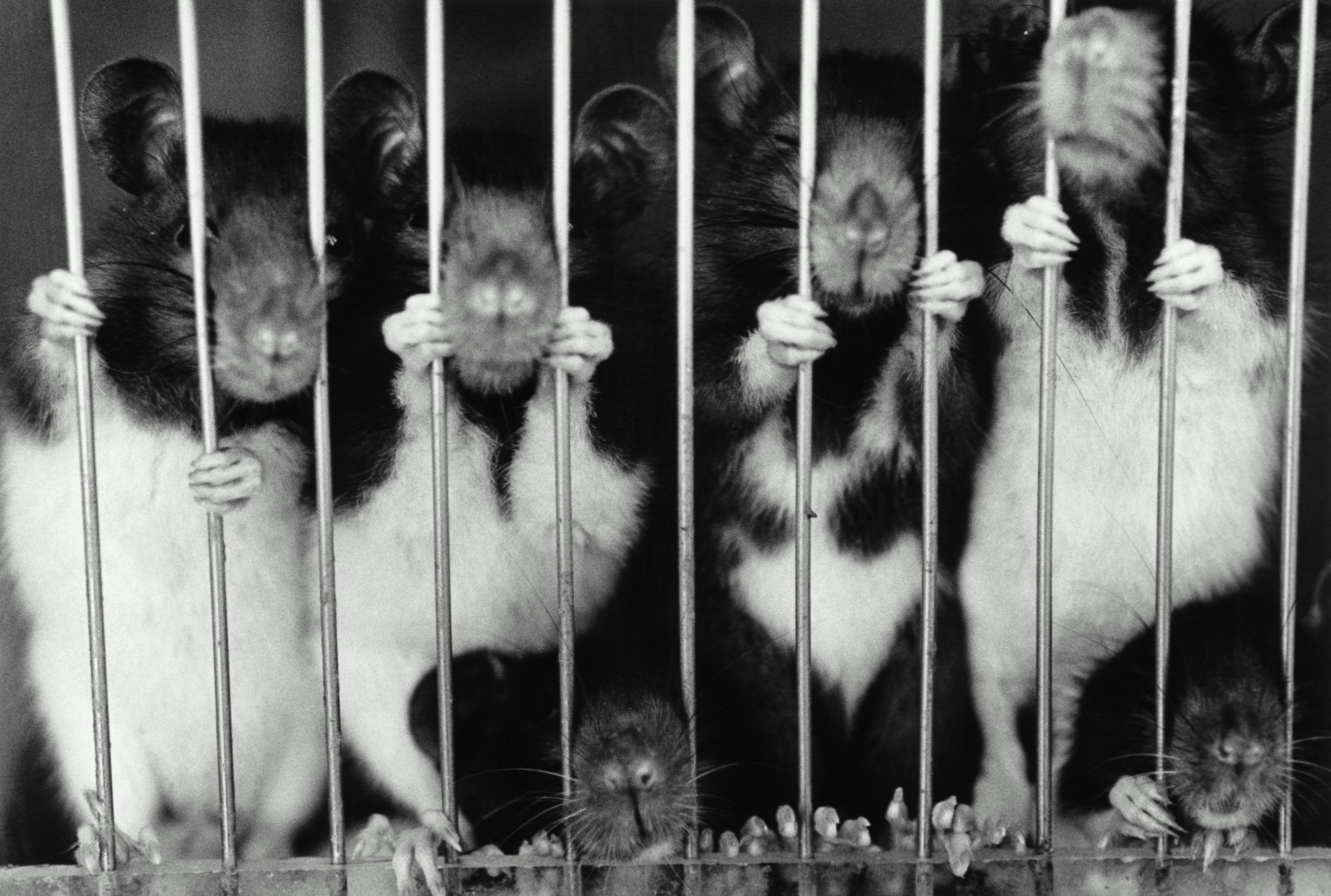 three major ways of how scientific experiments on animals are inhumane Animal research ethics evolving views and practices uthe project research involving animals has been a corner- stone of medical.