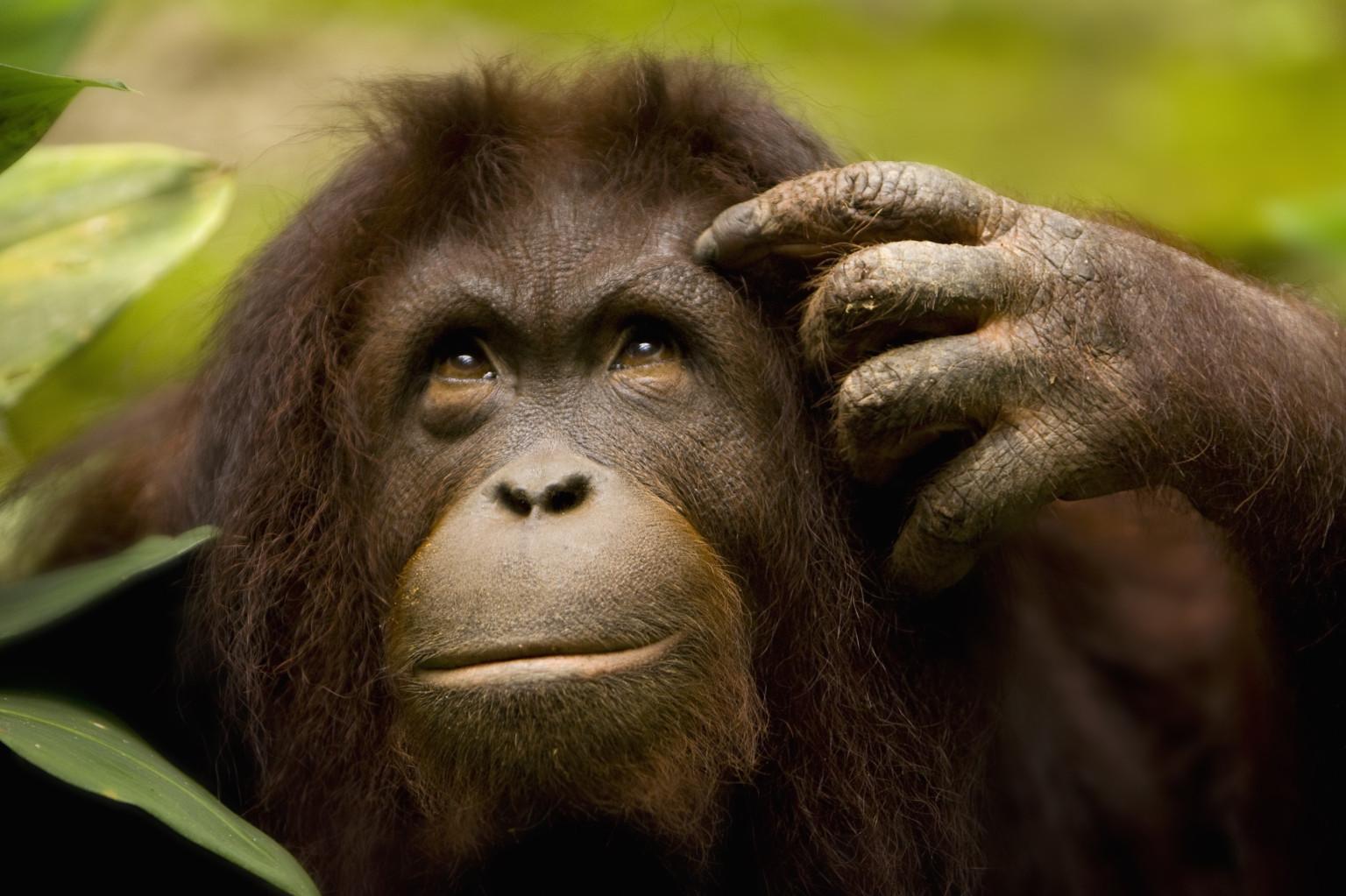 Monkey kiss face