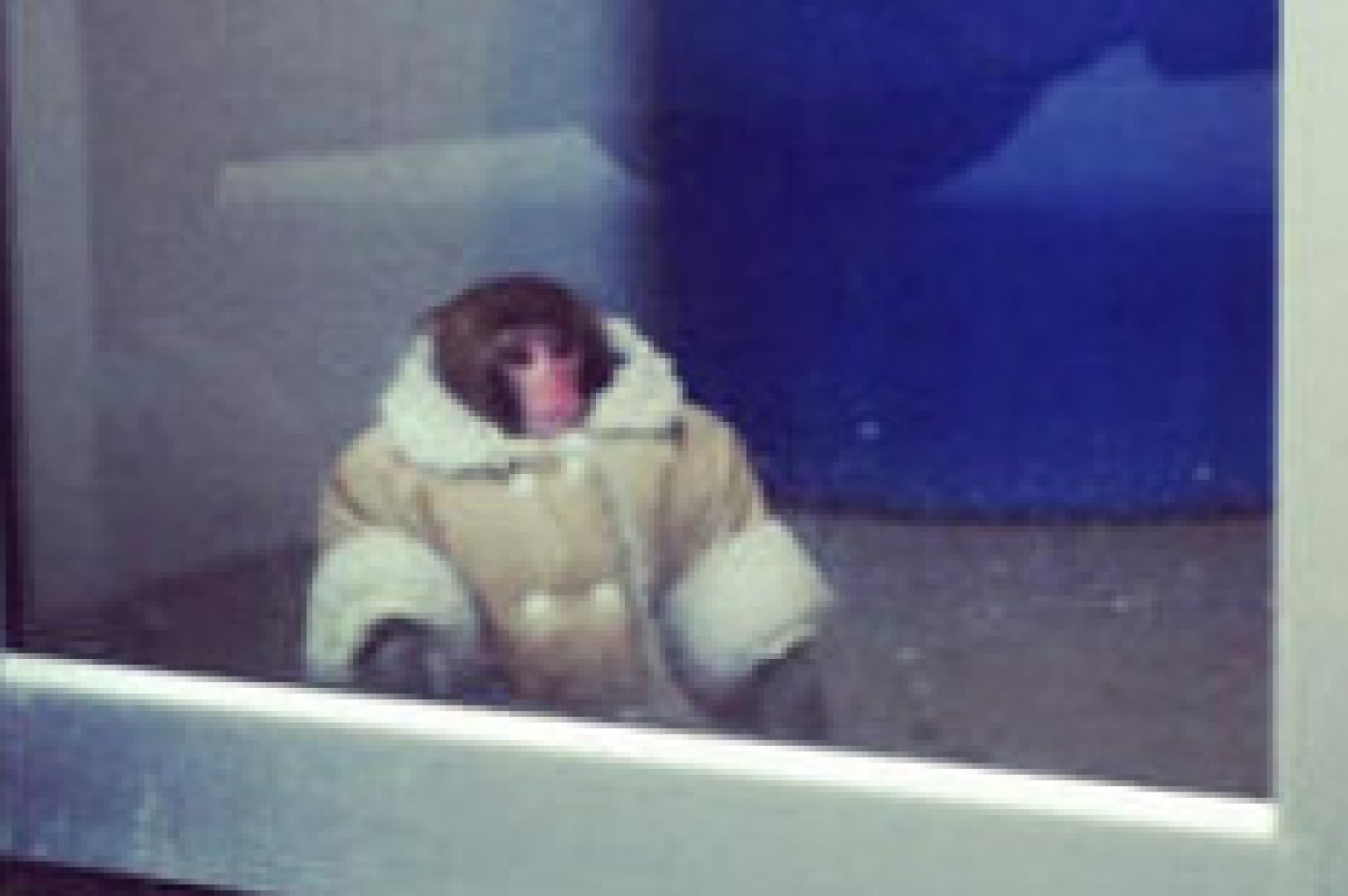 ikea monkeys former owner buys 2 new primates supporters say