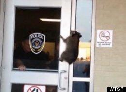 WATCH: Raccoon Breaks In To Police Department, Avoids Arrest