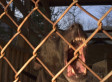 Pit Bull Attacks Raise Calls For Tough Restrictions  (POLL)