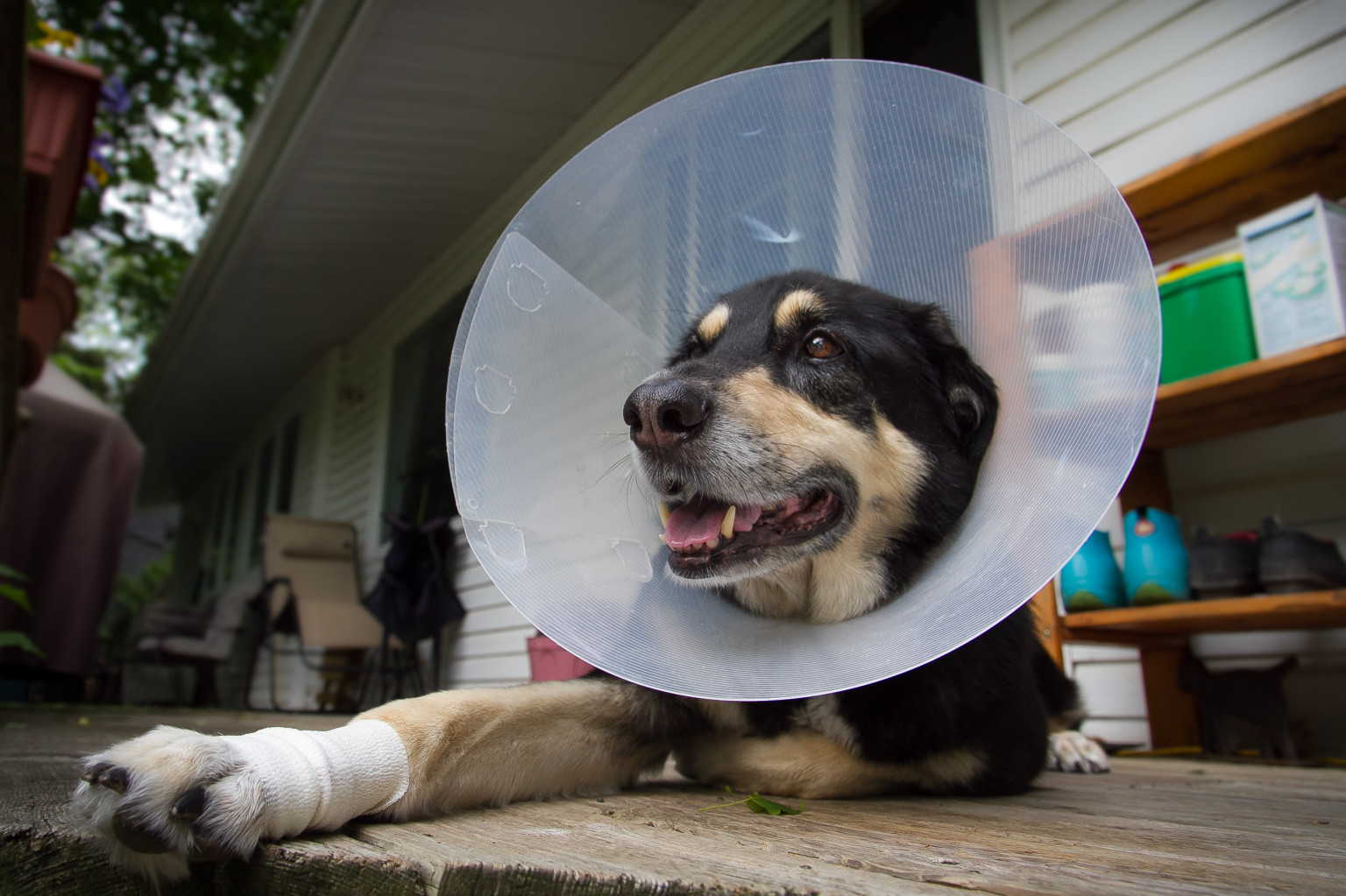 Make Own Medical Dog Collar