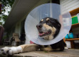 E-Collar Alternatives: 5 Pet-Friendly Substitutions For The Cone Of Shame