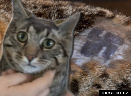 Horror As Cat Is Shaved And Daubed With Swastika
