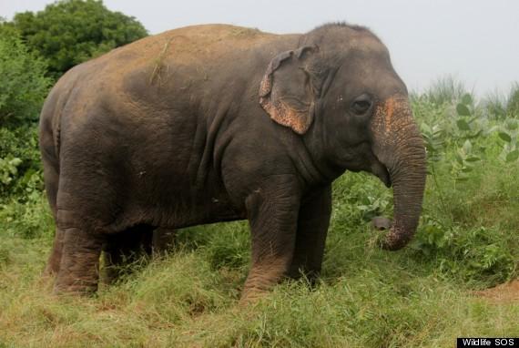 lakshmi elephant india