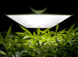 Intuit Contest Could Inadvertently Lead To Super Bowl's First Marijuana Commercial