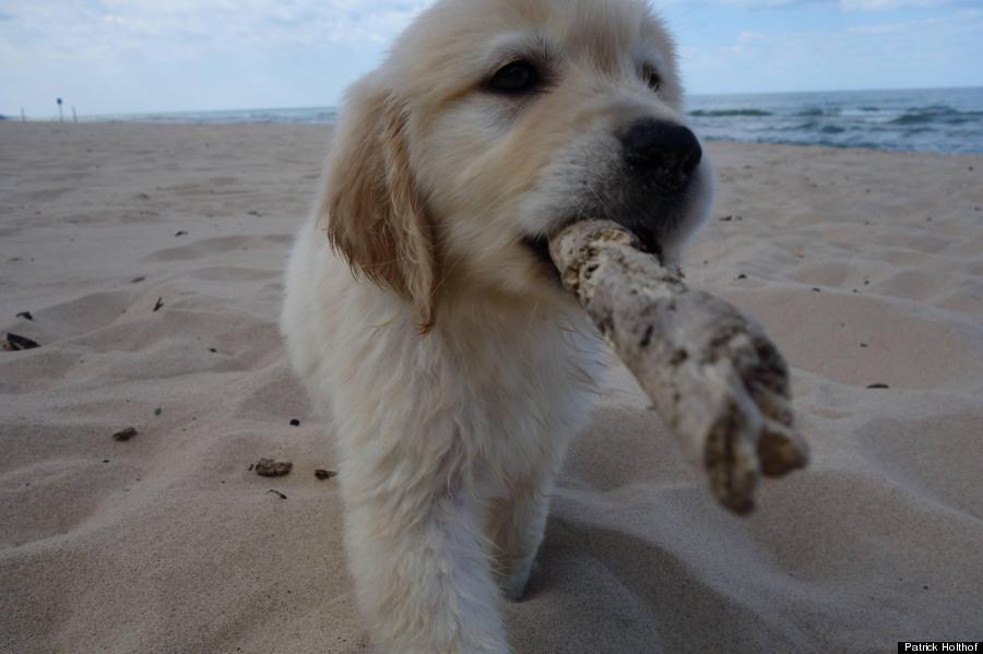 puppy 6