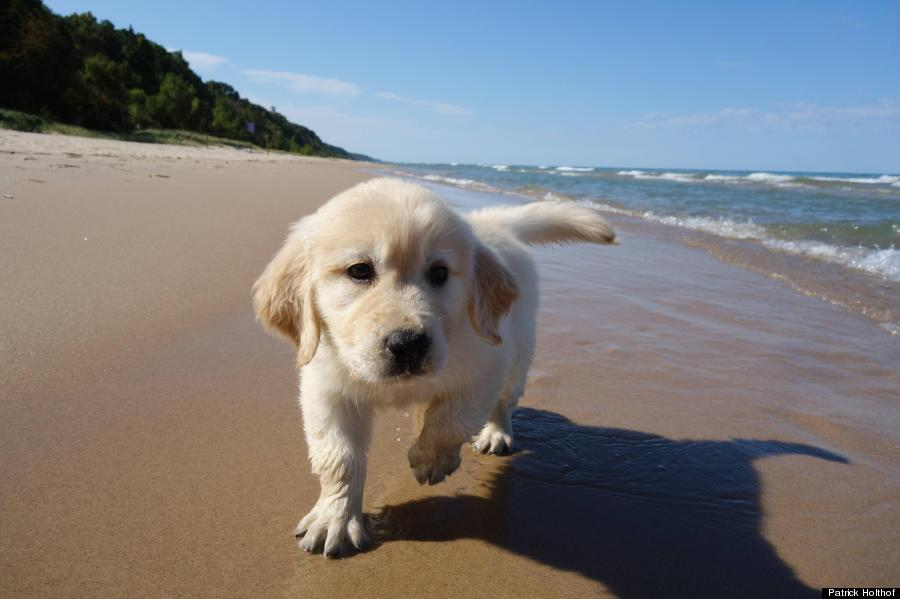 Puppy S First Visit To The Beach Will Make All Other Dog