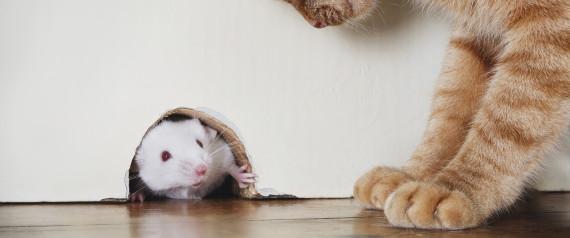 CAT MOUSE