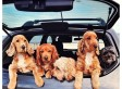 Best Places For Dogs And Their Owners To Live In America (PHOTOS)