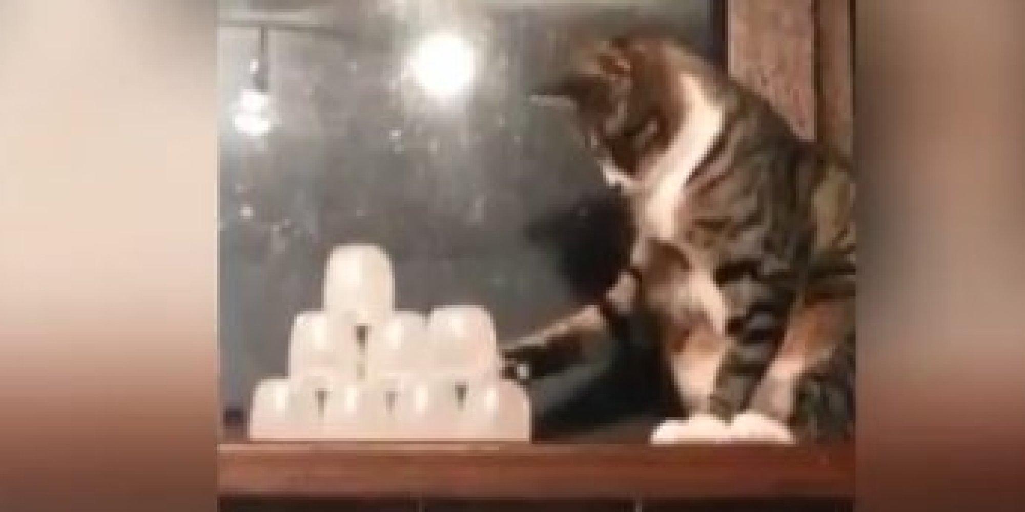 Jerk Cats Love Knocking Sh*t Over   HuffPost