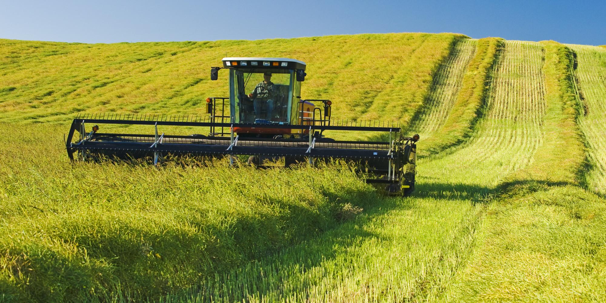 Photo of Bumper crop