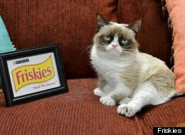 Grumpy Cat Is The Unhappy New Face Of Friskies