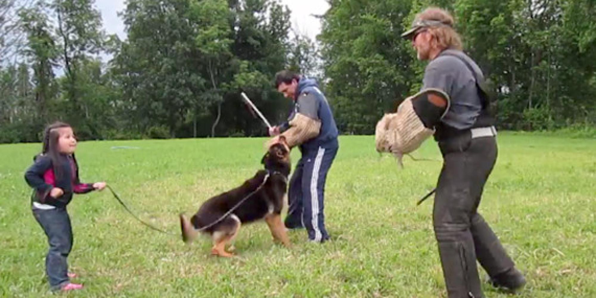 Biggest german shepherd on record o little girl german shepherd