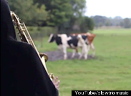 Cows Absolutely Love Sax Solo Mooo-sic!