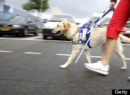 WOW: Hero Guide Dog Saves Baby From Oncoming Car