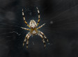 Tracey Crouch, Spider Phobia MP, Sparks Security Alert At Parliament