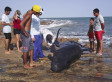 Beached Dolphins In Brazil Spotted By Rio Grande Do Norte Environmental Police (PHOTOS)