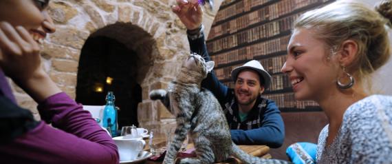 CAT CAFE PARIS