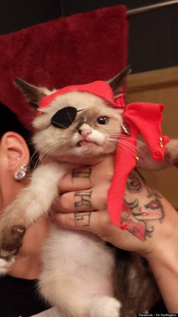 Sir Stuffington One Eyed Kitten Dons Pirate Costume To Raise Money For Animal Shelters VIDEO PHOTOS