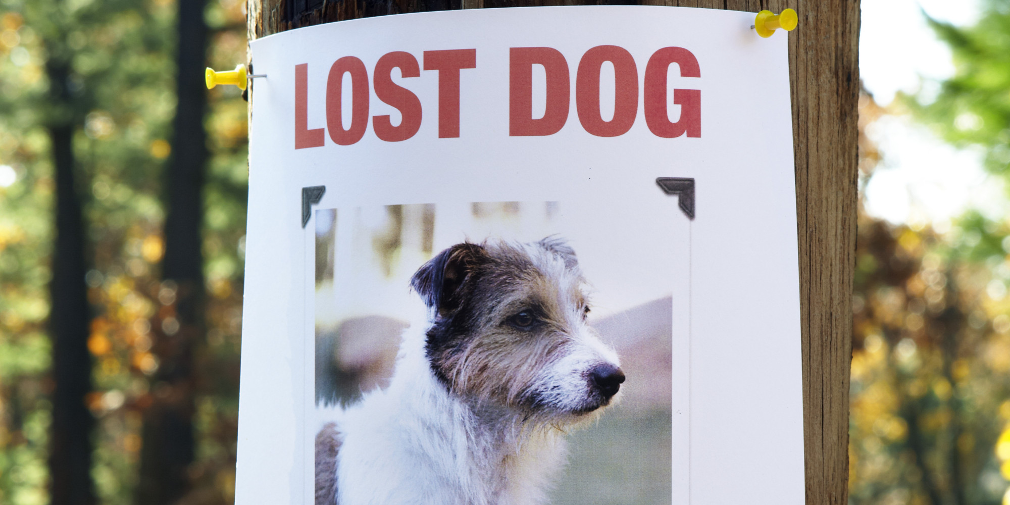 Search Lost Pets | Animal Humane Society