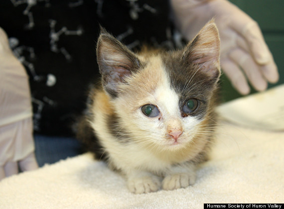 88 kittens rescued